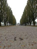 Dachau_DSC06537