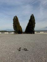 Dachau_DSC07104